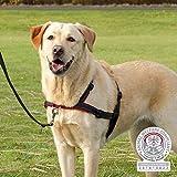 Trixie Lead'n'Walk Hundehalsband, Größe M-L