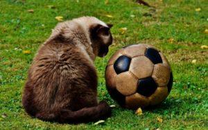 Ihr seid ein Katzensprung entfernt einen richtigen Ball zu finden.