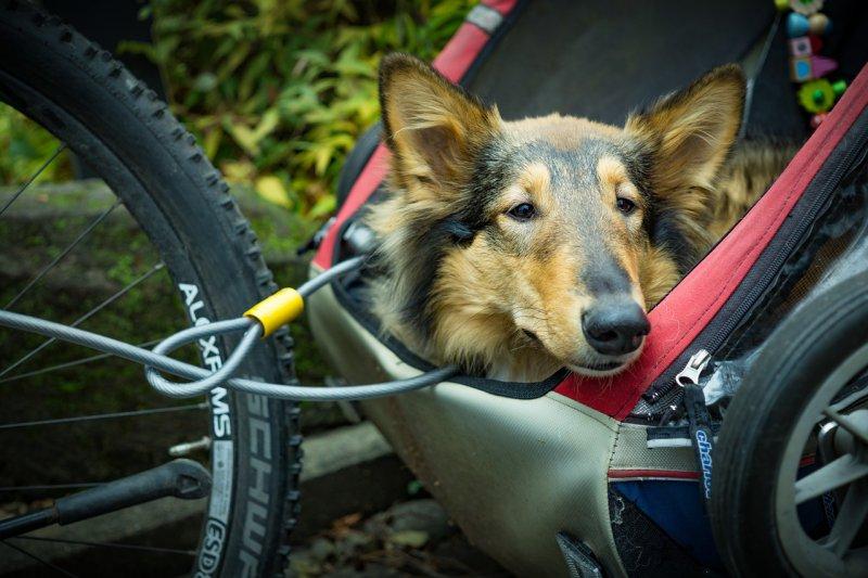 Fahrradhundeanhänger im Test