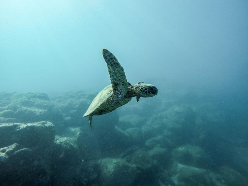 Unterwasserfotografie mit Schildkröte