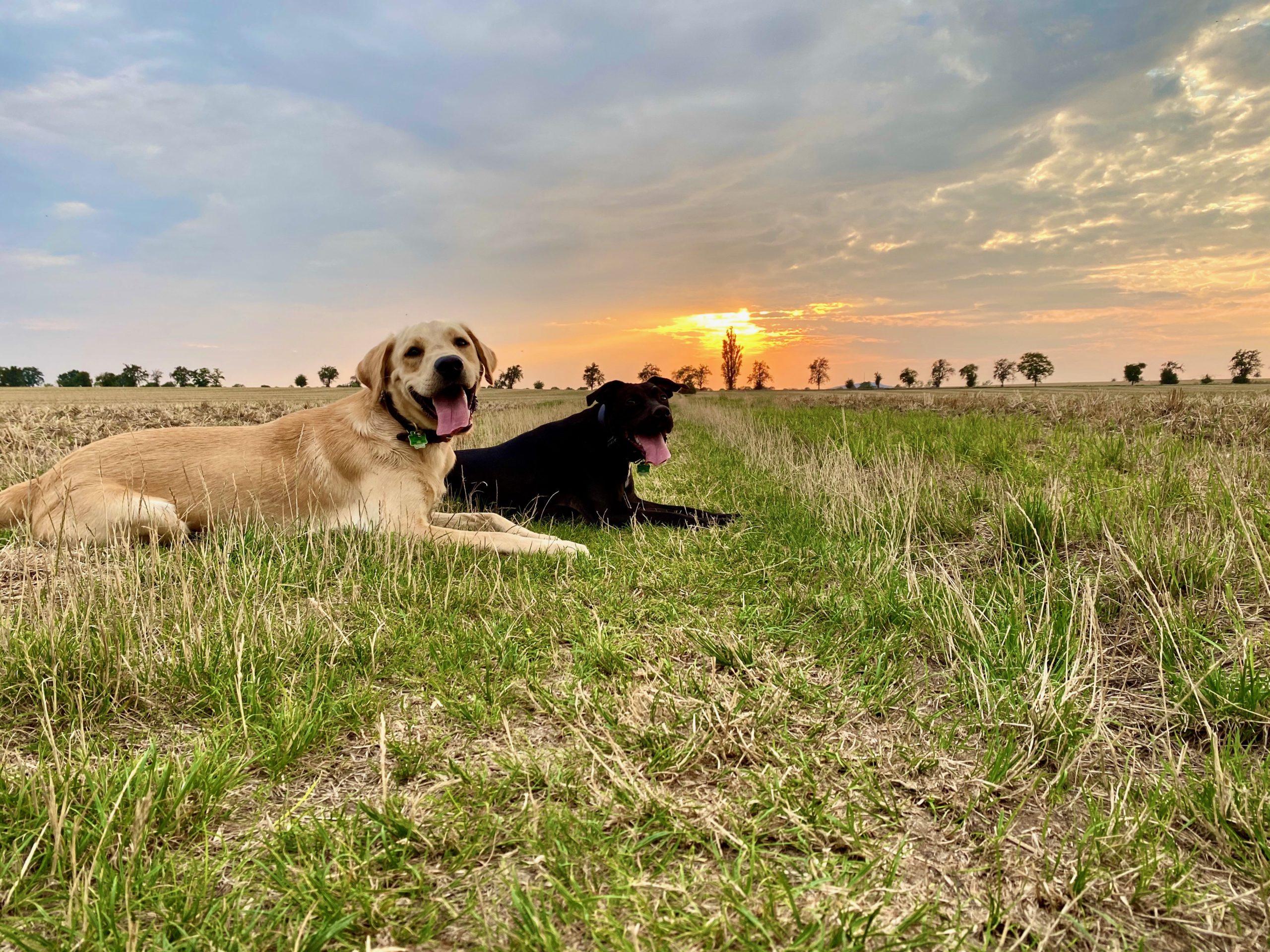 Hund, wandern, Feld, Berg