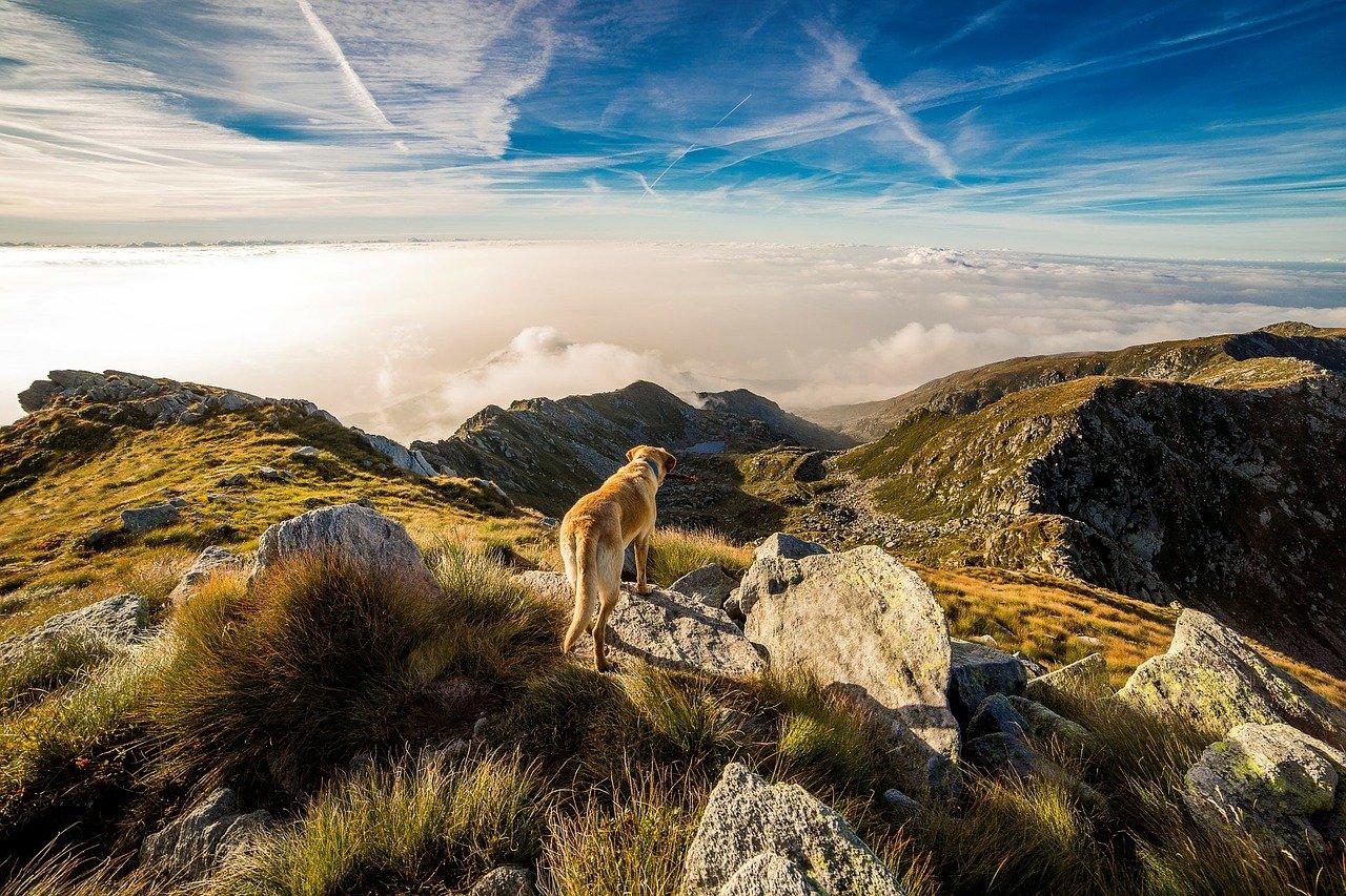Hund, Mensch, wandern