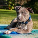 Kaufratgeber, Hund, Test