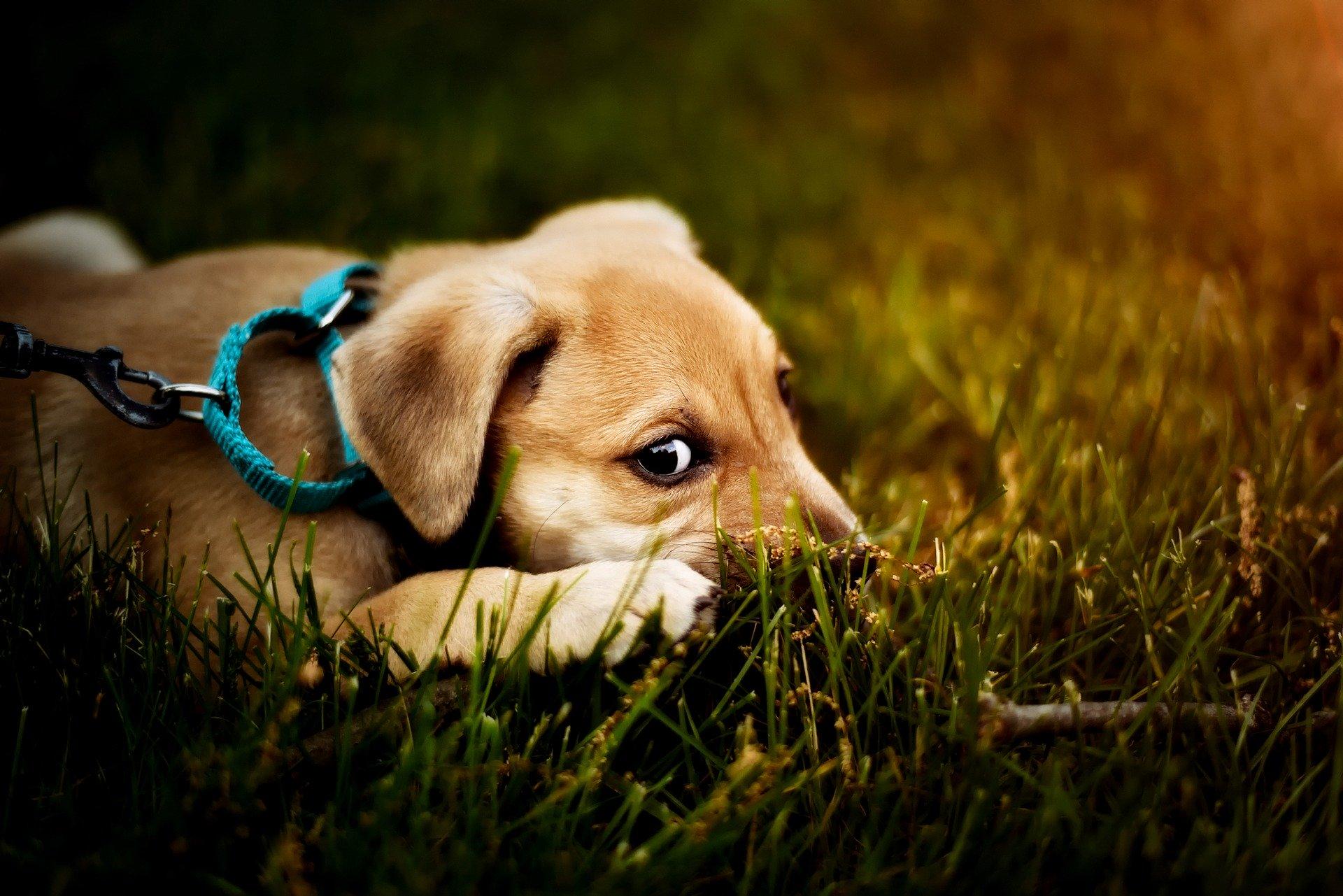 Hundehalfter Halti