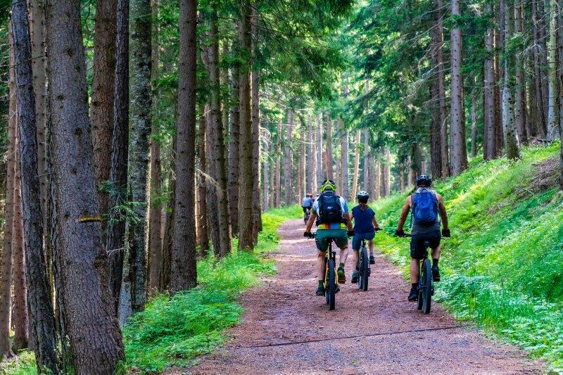 Familie fährt mit E-Mountainbikes Offroad einen Trail im Wald