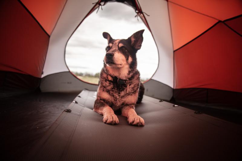 Hund im Campingzelt auf einer Matte