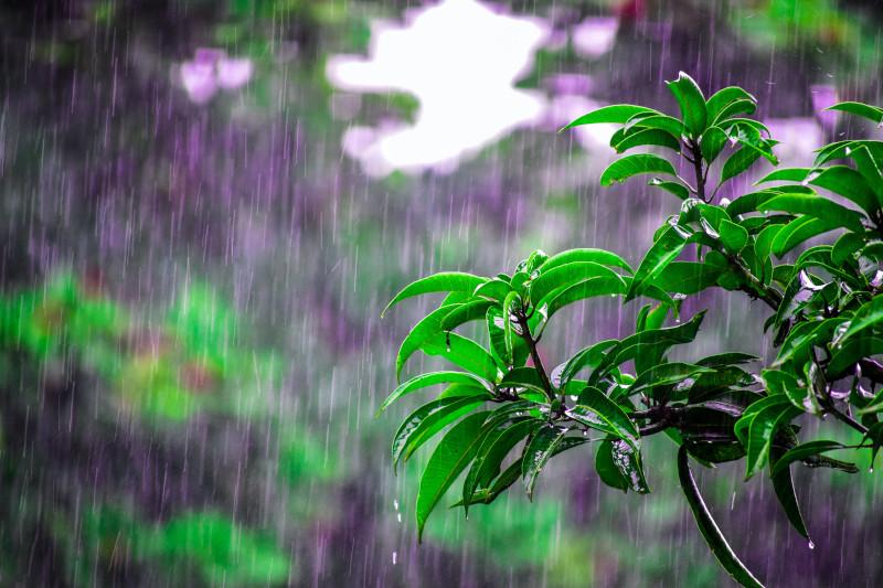 Outdoor im Regen