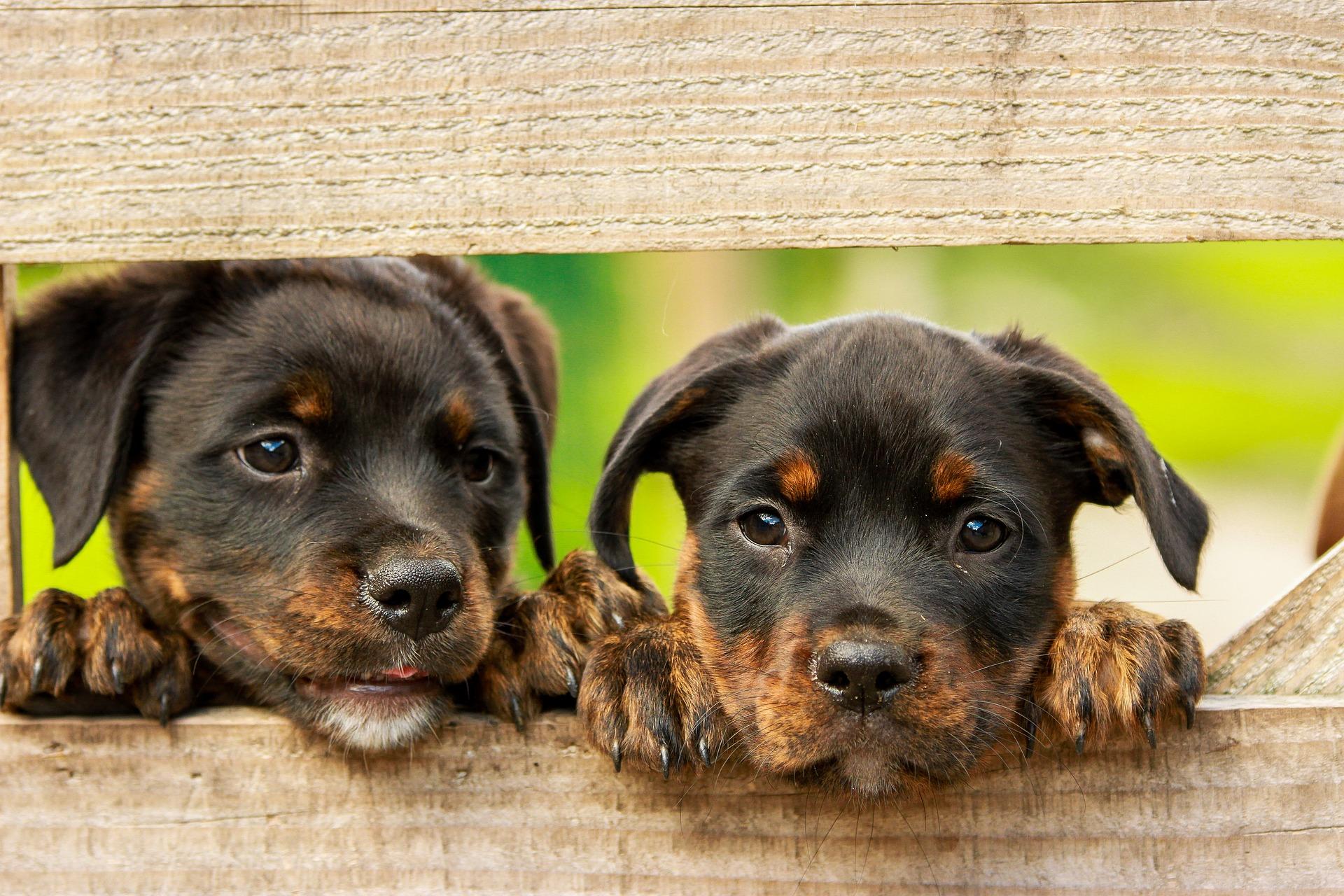 Hundebox, Verschieden Arten