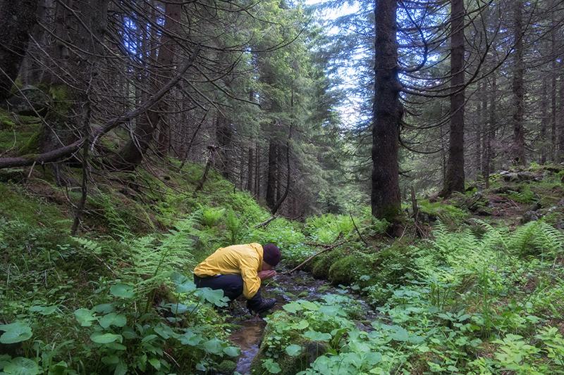 Eine Person trinkt Wasser aus einem Fluss im Wald