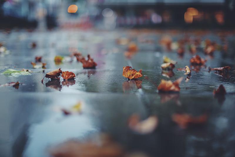 Straße im Regen mit Blättern