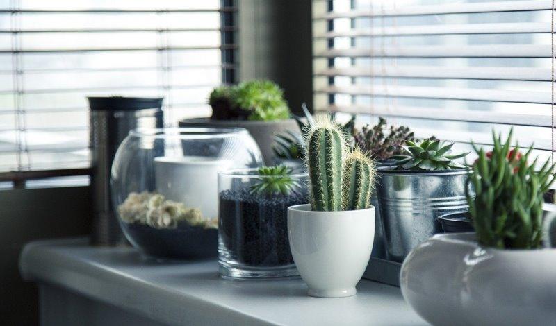 Pflanzen pflegen: Welche Hinweise Du beachten solltest, erfährst Du hier.