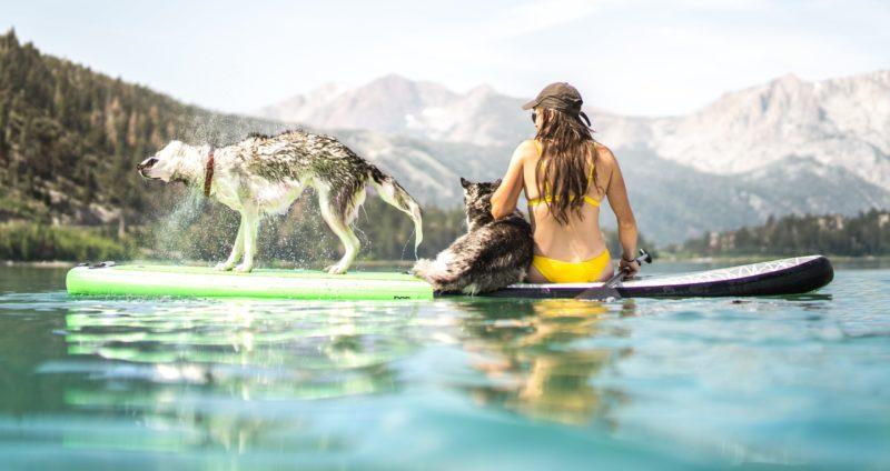 Frau mit zwei Hunden auf SUP