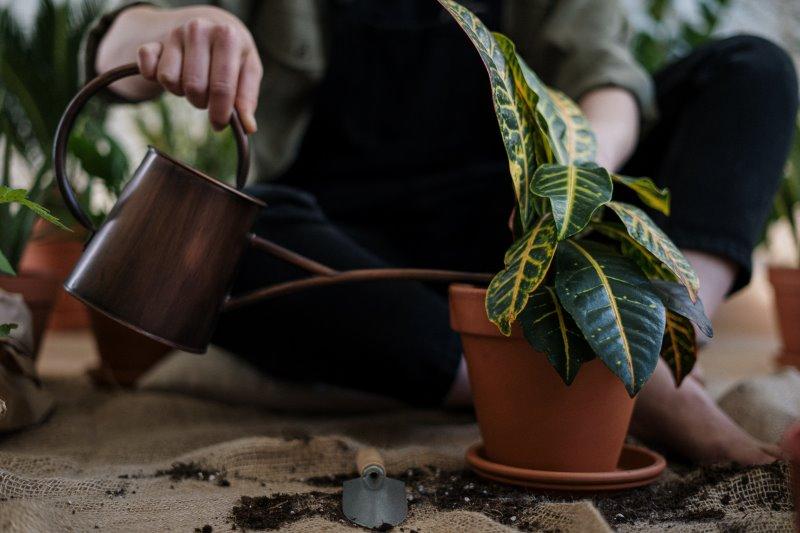 Pflanzen pflegen: Gießen ist sehr entscheidend