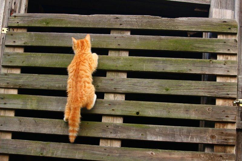 Kletterwand für Zuhause für die Katzen