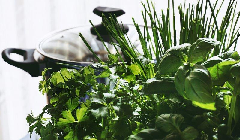 Kräuter pflegen - Zimmerpflanzen-Pflege leicht gemacht