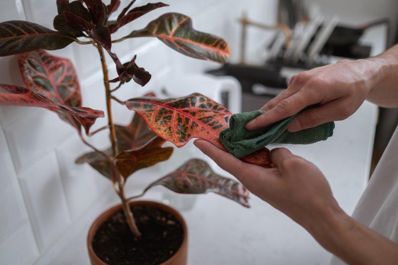Pflanzen pflegen: Auch Blattpflege ist entscheidend