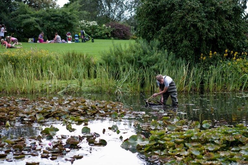 Ein Mann reinigt einen Teich und trägt eine Neopren Wathose.