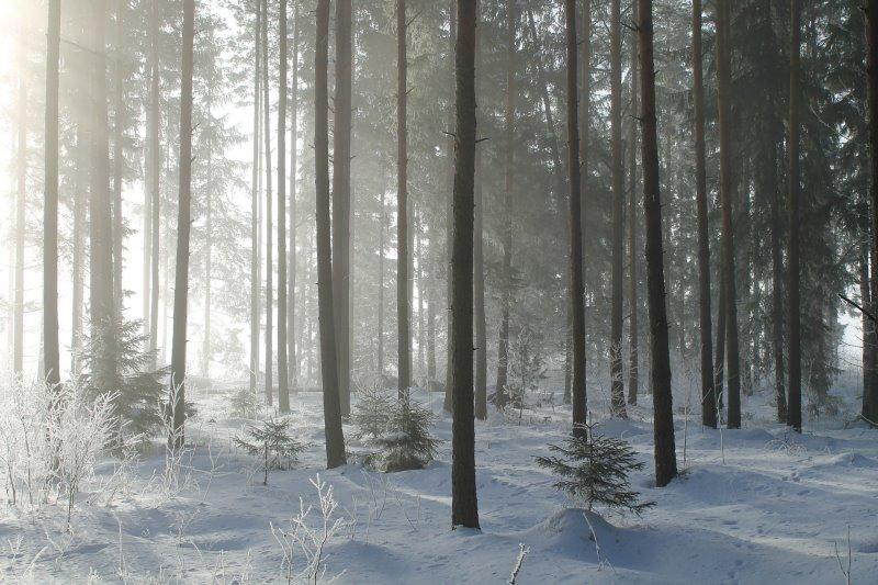 Überleben in der Kälte