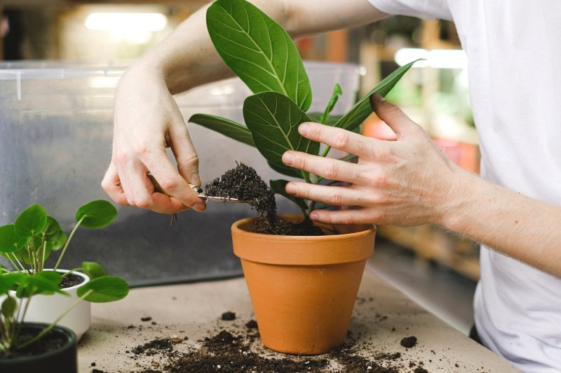Pflanzen pflegen: Umtopfen ist notwendig