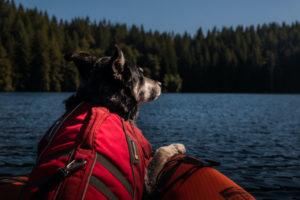 Hund sitzt mit roten Hundeschwimmweste auf einem Boot