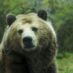 Bärenspray: Test, Vergleich und Kaufratgeber