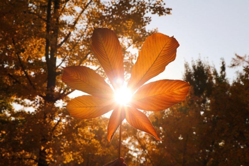 Lichttherapie Lampen helfen gegen Winterdepression