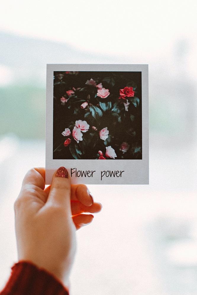 Sofortbildfoto von Blumen mit Beschriftung