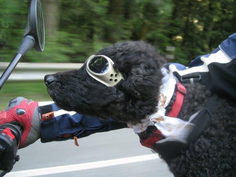Auch Hunde können kleine Touren mitmachen, müssen aber entsprechend gesichert werden