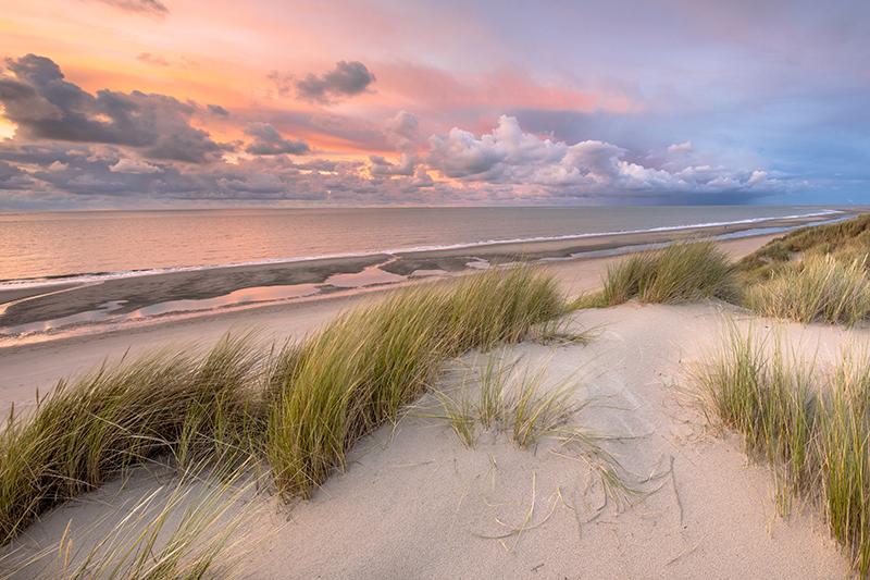 Nordseestrand bei Sonnenuntergang mit Schilf und Dünen.