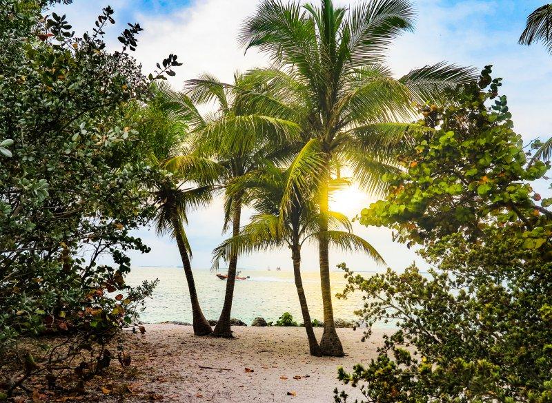 Palmen und der Strand in Key West, die Sonne scheint unter zu gehen.