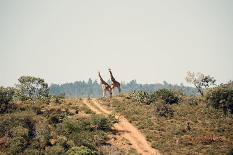 Natur auf Deiner Afrikareise hautnah erleben
