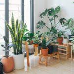 5 pflegeleichte Zimmerpflanzen, die sich nur schwierig töten lassen