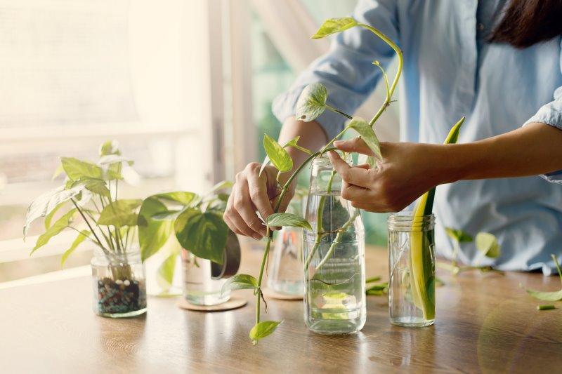 Vermehrung von pflegeleichten Zimmerpflanzen