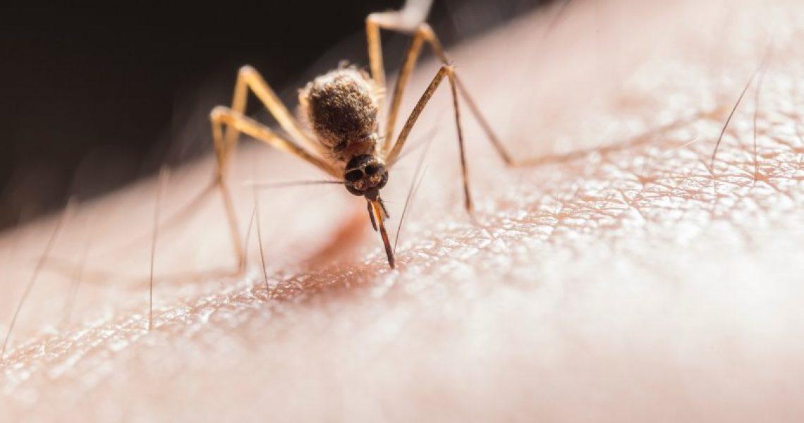 Mückenschutzmittel im Test